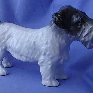 """vintage Sealyham Cesky terrier Ens Germany 7"""""""