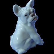 "French Bulldog puppy B&G Denmark 6"""