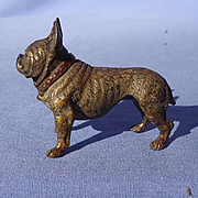 Vienna bronze brown French Bulldog