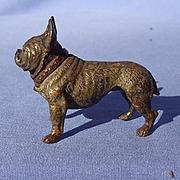 Vienna bronze brown French Bulldog