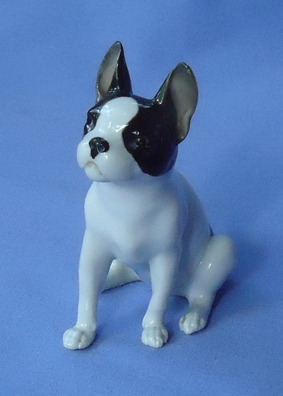 French bulldog Schierholz Germany 4""