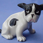 1930s French bulldog puppy Germany sp2105/3