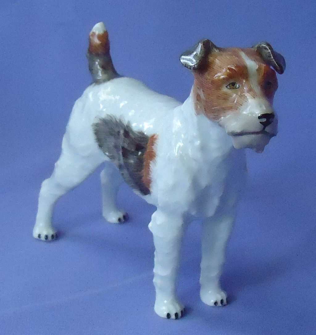 Fox terrier Jack Russell Dresden Germany