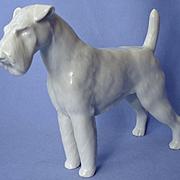 "Meissen Airedale Fox Irish Welsh terrier Meissen Germany 9"""