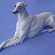 """Whippet Italian greyhound Austria 7"""""""