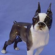 "1950s Boston terrier dog Hutschenreuther Germany 7"""