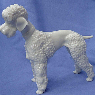 """1950s white Poodle dog Hutschenreuther Germany 8"""""""