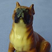 1940s Boxer dog puppy Mortens Studio
