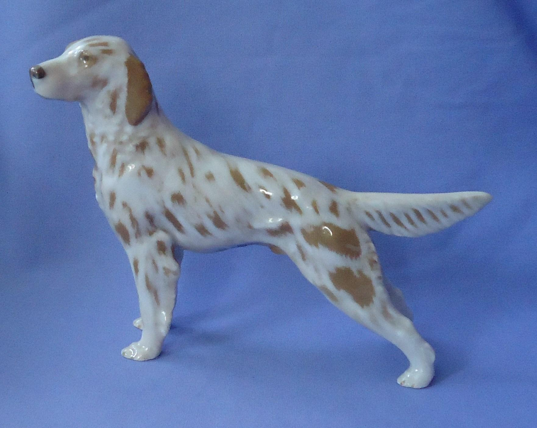 Orange Belton English setter Denmark