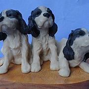 English Springer Spaniel puppies Ralph Massey #12/150
