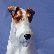 "rare Royal Staffordshire Wire hair Fox terrier 9"" Jack Russell dog LE49/500"