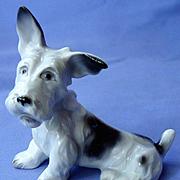 """Scottish terrier Schlaggenwald Czechoslovakia 4"""""""