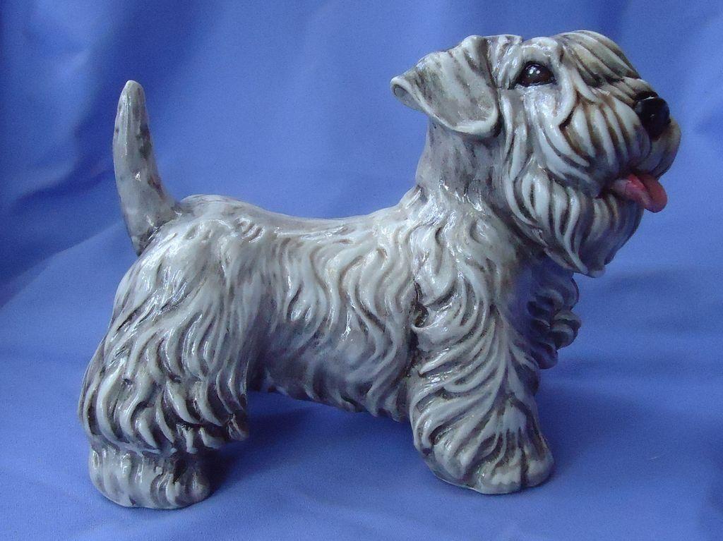 "Sealyham  Cesky terrier Italy  8"""