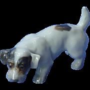 """Sealyham Cesky Terrier puppy Copenhagen Denmark 7"""""""