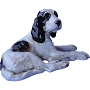 rare English setter Springer spaniel Germany 8""