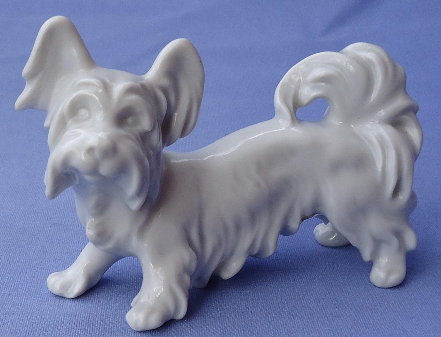 Skye Silky Yorkshire terrier Austria