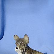"""Skye silky Terrier  Briard 6"""""""