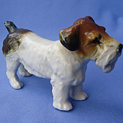 Sealyham Cesky terrier Ens Germany 5""
