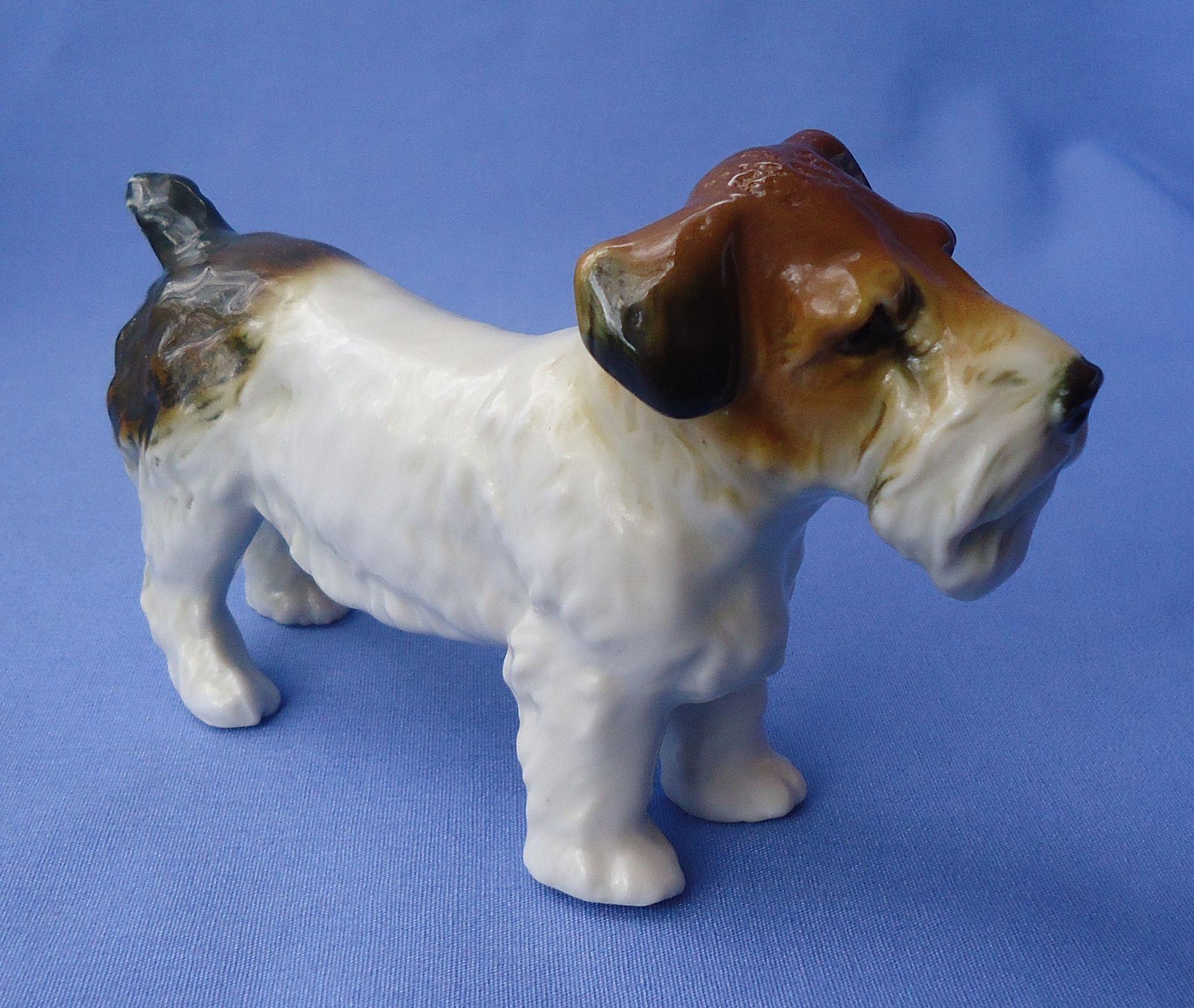 "Sealyham Cesky terrier Ens Germany 5"""