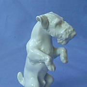 1940s Wire fox terrier Schnauzer Germany 5""