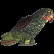 Parrot Pen Wipe