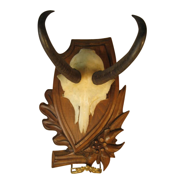 Black Forest Chamois Horn Trophy