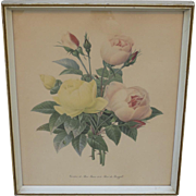 French Antique Framed Print Antique Floral Print