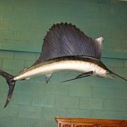 Original Antique Full Sized Large Wall Hung Swordfish Mounted Sailfish Bill-Fish Antique Taxidermy