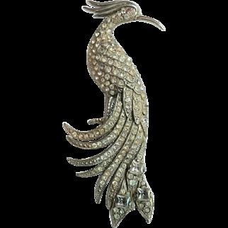 Vintage 1920's Book Piece Large Rhinestone Exotic Peacock Bird Pin Rhodium Plated Back & Front Comb & Beak