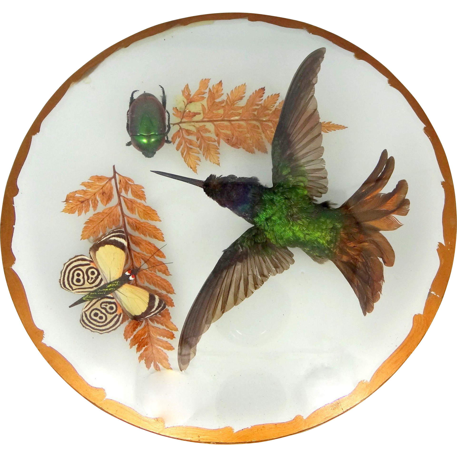 RARE Victorian Genuine Hummingbird, Scarab Beetle, and Moth Taxidermy Between Glass