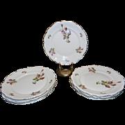 """Vintage Rosenthal Moss Rose Large 10 ½"""" Dinner Plate Pompadour Pattern"""