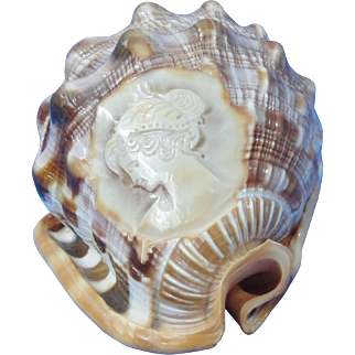 "5"" Conch Shell With Carved Cameo Image"