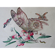 Vintage Hand Painted Illustration, Painting of Butterflies and Insects