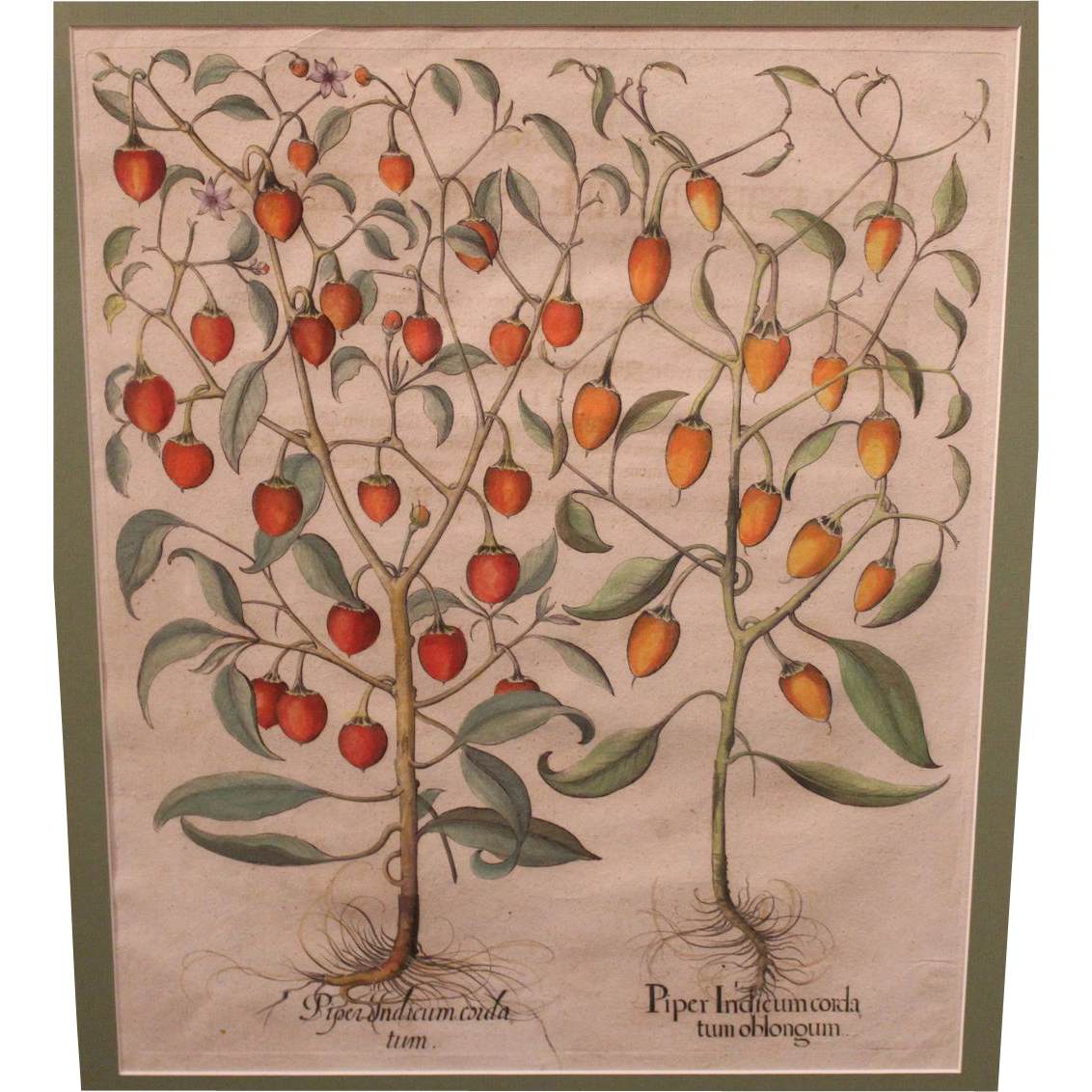 Basilius Besler 17th c Botanical Framed Print