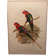 William Matthew Hart Parrots Color Lithograph John Gould's Birds of New Guinea 1875
