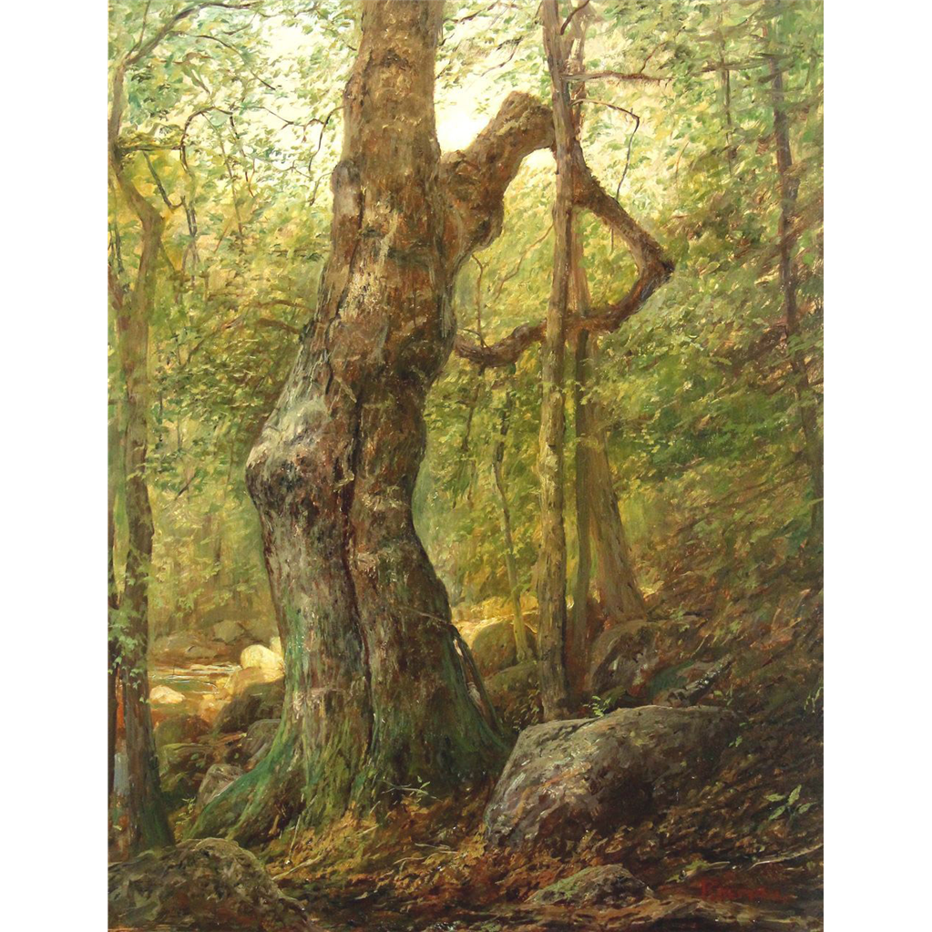 Erik Koeppel White Mountain Oil Painting Old Beech Tree in Crawford Notch  NH