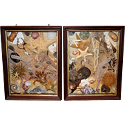 Pair of 19th / 20th c Sea Life Dioramas or Shadow Boxes