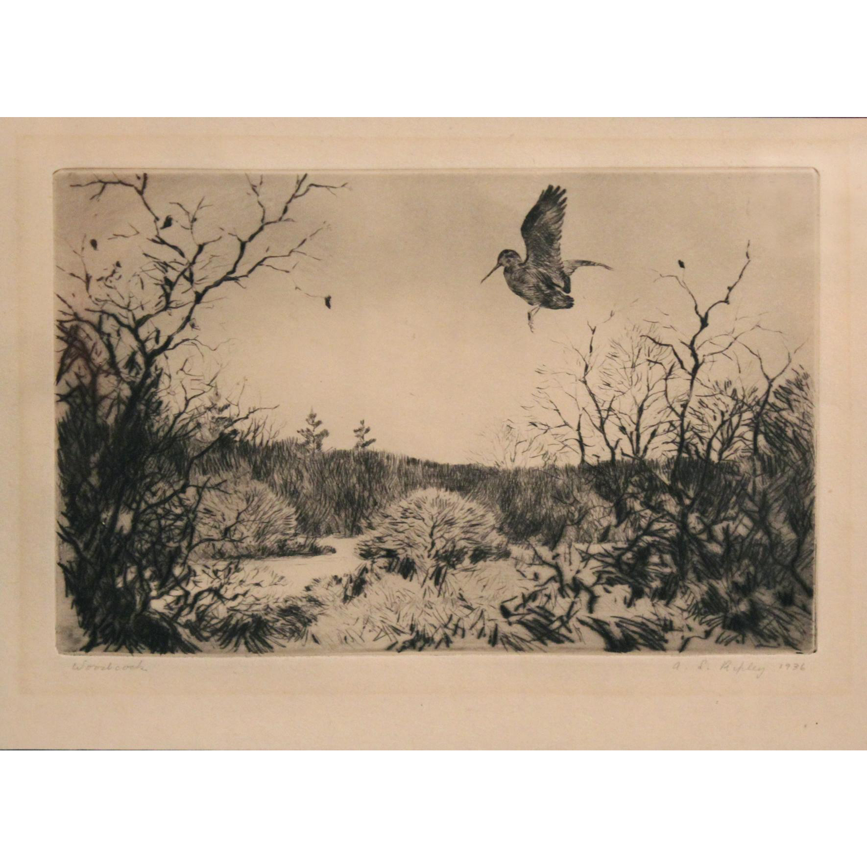 Aiden Lasell Ripley Pencil Signed Etching - Woodcock