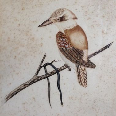 Original  Antique Australian Signed Pen, Ink, Watercolor 'Kookaburra with Black Snake' 1912.