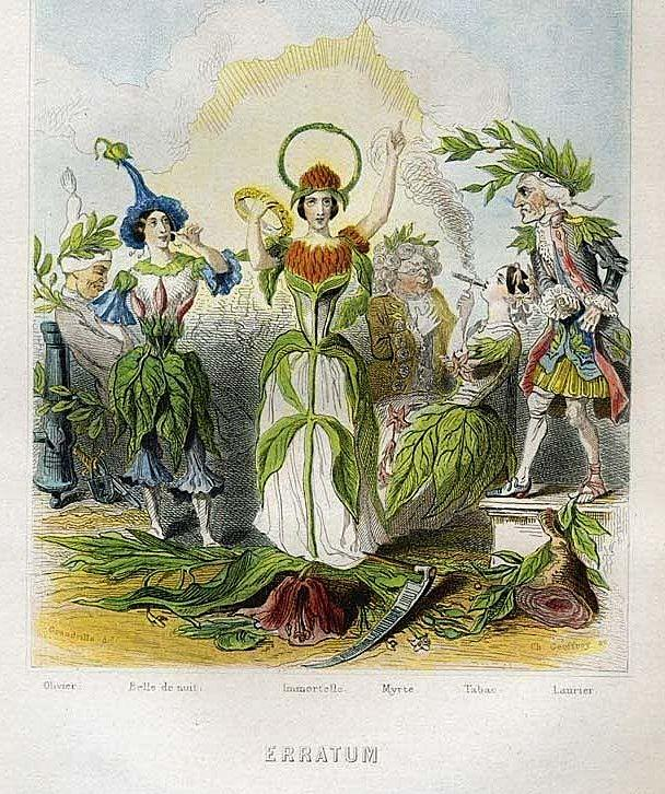 Grandville Victorian Engraving 'Erratum' 1847 from Les Fleurs Animees.