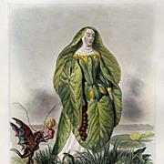 Grandville Victorian Engraving 'Nenuphar' 1847 from Les Fleurs Animees.