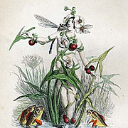 SALE: Original Signed Grandville French  Engraving 'Fleche-D'Eau' 1867 from Les Fleurs Animees.