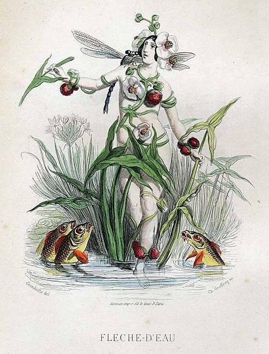Original Signed Grandville French  Engraving 'Fleche-D'Eau' 1867 from Les Fleurs Animees.