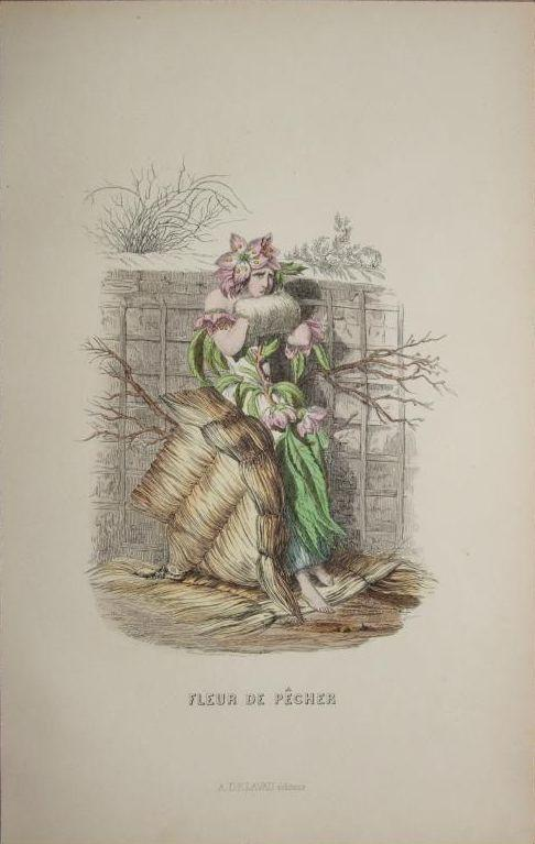 Original Grandville Signed French  Engraving 'Fleur de Pecher' by Grandville 1852.
