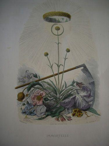 SALE: Grandville Victorian Engraving 'Immortelle' from Les Fleurs Animees. 1867.