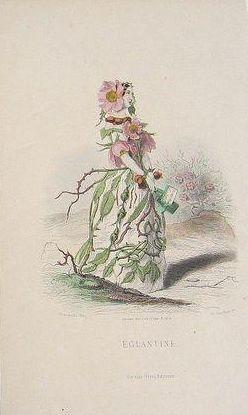 Grandville Victorian Engraving 'Eglantine' 1867 from Les Fleurs Animees.