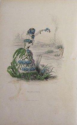 Grandville Victorian Engraving 'Forget Me Not' 1867 from Les Fleurs Animees.