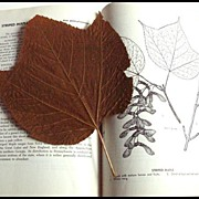The Book Of Trees -- Vintage Natural History Book