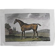 "Lithograph Print of John Scott engraving of horse "" Whiskey Got By Saltram"" from 1798 : circa 1872"