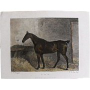 "Lithograph Print of John Scott engraving of horse ""L. O. P."" from 1828: circa 1872"